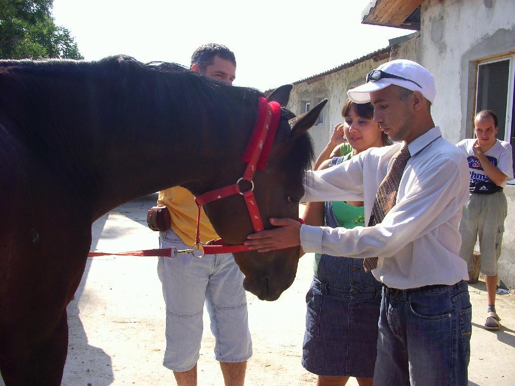 Хипотерапия с коне